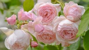 Flower Macro Pink Flower Rose 2048x1356 wallpaper