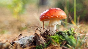 Earth Mushroom 3840x2160 Wallpaper