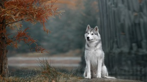 Dog Pet Depth Of Field 1920x1280 Wallpaper