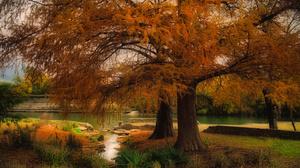Lake Park Tree 3000x2000 Wallpaper