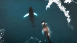 Aerial View Greenland Whale Animals Mammals Sea 2000x1289 Wallpaper