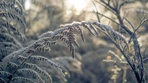 Frost Macro Plant 1920x1200 wallpaper