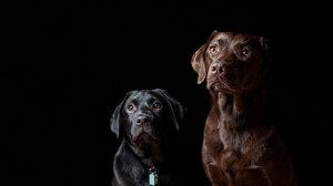 Dog 1920x1200 Wallpaper