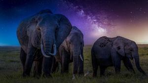 Elephant Wildlife 2048x1152 Wallpaper