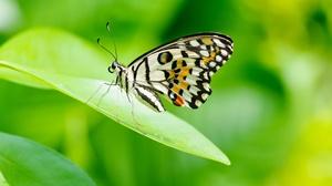 Animal Butterfly 3072x2041 Wallpaper