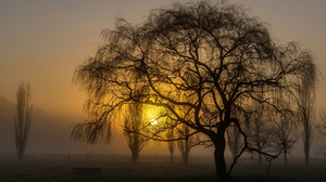 Sunset Trees Silhouette Weeping Willow Nature Landscape 1920x1200 Wallpaper