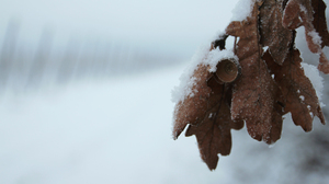 Cold Nature Leaves White Snow 3840x2160 Wallpaper