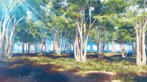 Forest Sunbeam 2000x1125 Wallpaper