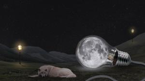 Moon Wolf 1920x1080 Wallpaper