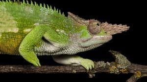 Animal Chameleon 2048x1361 wallpaper