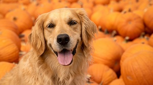 Dog Pet Stare 2048x1365 Wallpaper