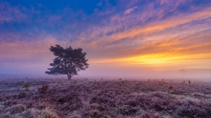 Field Fog Sky Sunset Tree 1920x1080 Wallpaper