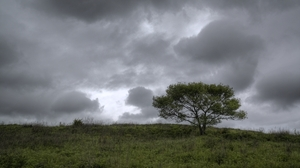 Landscape Nature Trees Russia 4290x2856 Wallpaper