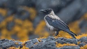 Bird Crow Hooded Crow Wildlife 2048x1365 wallpaper