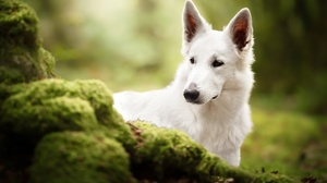 Dog Pet 3600x2403 wallpaper
