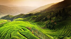 Nature Landscape Rice Paddy China Mountains Mist Trees Field Green Terraces 1600x1000 Wallpaper