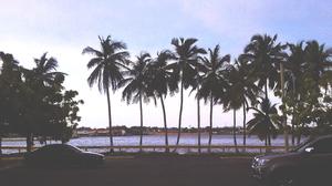 Palm Trees Vehicle Isla Dorada 3264x1836 Wallpaper