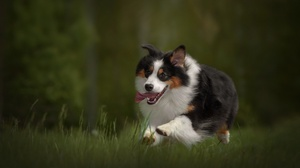 Dog Pet 2000x1374 Wallpaper