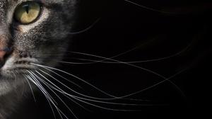 Animal Cat 2016x1578 Wallpaper