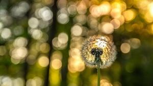 Bokeh Dandelion Depth Of Field Nature Summer 3840x2560 Wallpaper