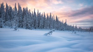 Cold Winter Ice Snow Outdoors Nature Trees 2048x1367 Wallpaper