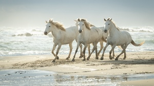 Beach Horse 3840x2160 Wallpaper