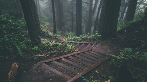 Steps Forest Green Foliage Pine Trees Trees Dirt Road Nature Stairs Mist 2560x1440 Wallpaper