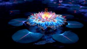 Flower Lotus 3840x2160 Wallpaper
