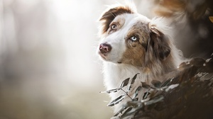 Dog Pet Depth Of Field 2048x1365 Wallpaper