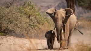 Animal Elephant 5119x3087 Wallpaper