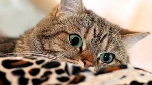 Cat Pet 3840x2560 Wallpaper