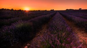 Field Flower Lavender Purple Flower Sunset 3072x2048 Wallpaper