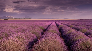 Field Landscape Lavender Nature Purple Flower Summer 2048x1365 Wallpaper