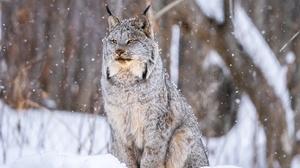 Depth Of Field Lynx Snow Wildlife Winter Predator Animal 2048x1365 Wallpaper
