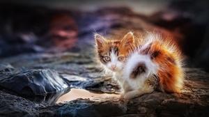 Cats Outdoors Animals Mammals Kittens Calico 2048x1356 Wallpaper