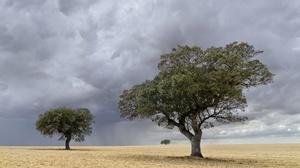 Field Sky Tree 2048x1294 wallpaper