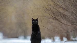 Animals Cats Mammals Outdoors Black Cats Snow Winter Nature 2500x1668 Wallpaper