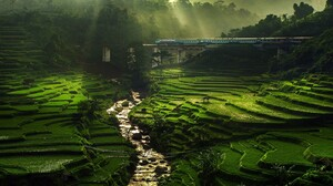 Nature Landscape Rice Paddy River Sun Rays Field Terraces Train Bridge Trees Mist Green Water Withou 1400x875 Wallpaper