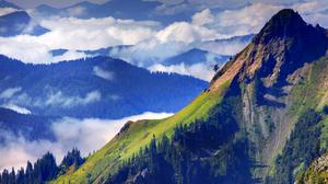 Cloud Fog Forest Landscape Scenic 1920x1200 wallpaper