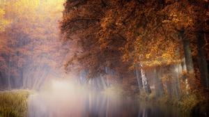 Fall Fog Foliage Nature 2048x1284 Wallpaper