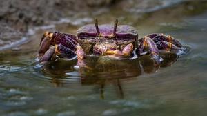Animal Crab 2560x1440 wallpaper