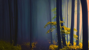 Earth Forest 5120x3413 wallpaper