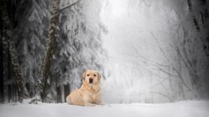 Depth Of Field Dog Golden Retriever Pet Snow Winter 2048x1367 Wallpaper