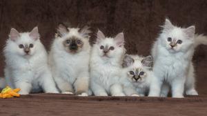 Animals Cats Kittens Mammals 1920x1080 Wallpaper