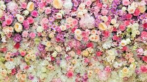 Blossom Colorful Daisy Flower Pastel Peony Pink Flower Purple Flower Rose White Flower 6000x4000 Wallpaper