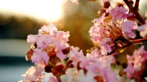 Cherry Blossom Flower Pastel Sakura Spring 1936x1296 Wallpaper