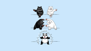 Bear Humor Panda 1920x1080 Wallpaper