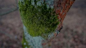 Forest Tree Bark Moss 1920x1280 Wallpaper