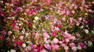Blur Flower Meadow Nature Pink Flower Red Flower White Flower 4256x2832 Wallpaper