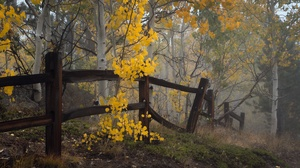 Nature Outdoors Plants Fence Fall Trees Twigs Branch Leaves 3840x2160 Wallpaper